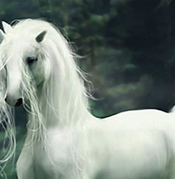 Unicornio criaturas míticas