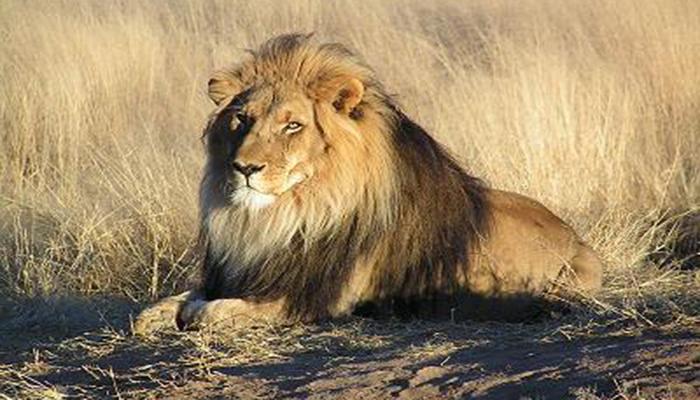 Decoración de la Torá: leones y águilas